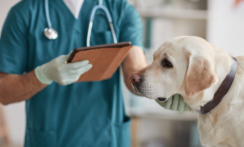 Bezpłatne czipowanie psów i kotów